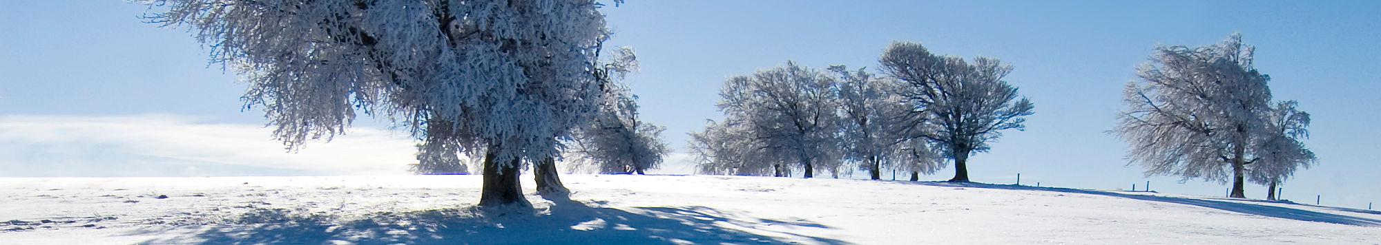 Querformatbild einer ebenen Schneelandschaft mit etwa ein Dutzend schneebedeckten Laubbäumen.